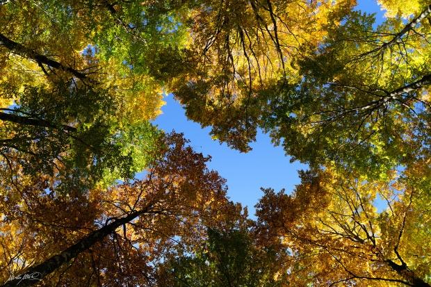 Autunno nel Parco Nazionale degli Abruzzi